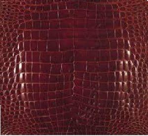 ラージクロコダイル(ニューギニアワニ)